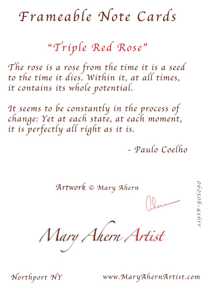 060508 4x6x300 rr Triple Red Rose back