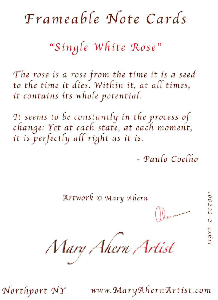 100602 4x6xrr Single White Rose back