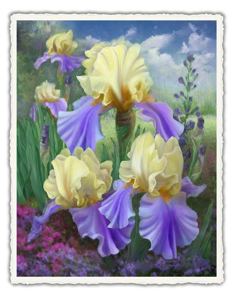 151010 4x6rr Ellens Irises front