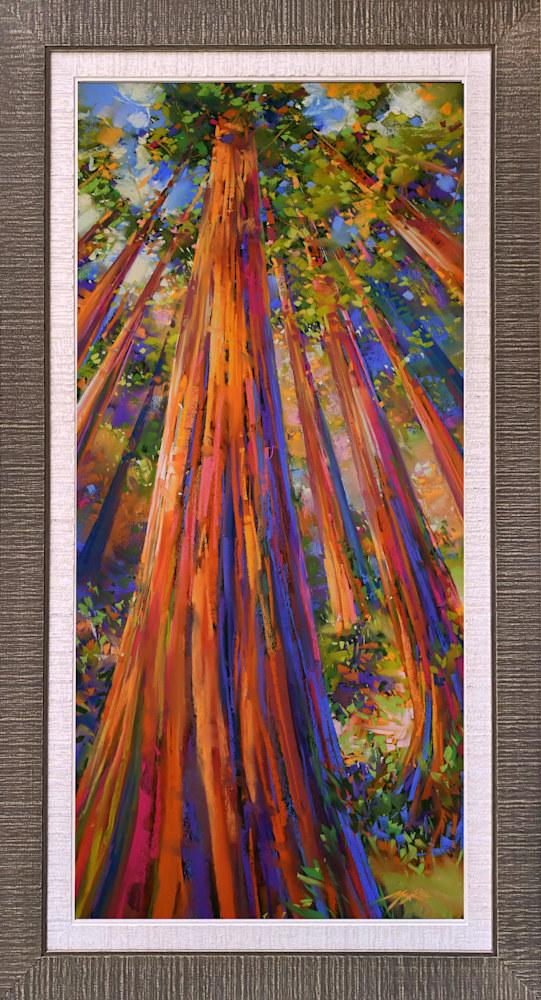 Redwoods Up Framed