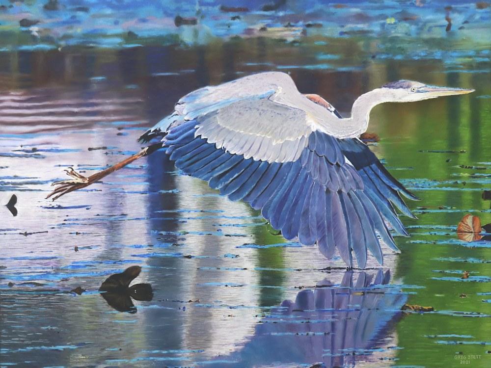 Swooping Heron