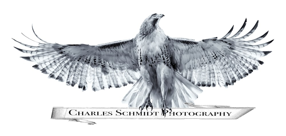 Red tailed Hawk like Phoenix Rising Edit