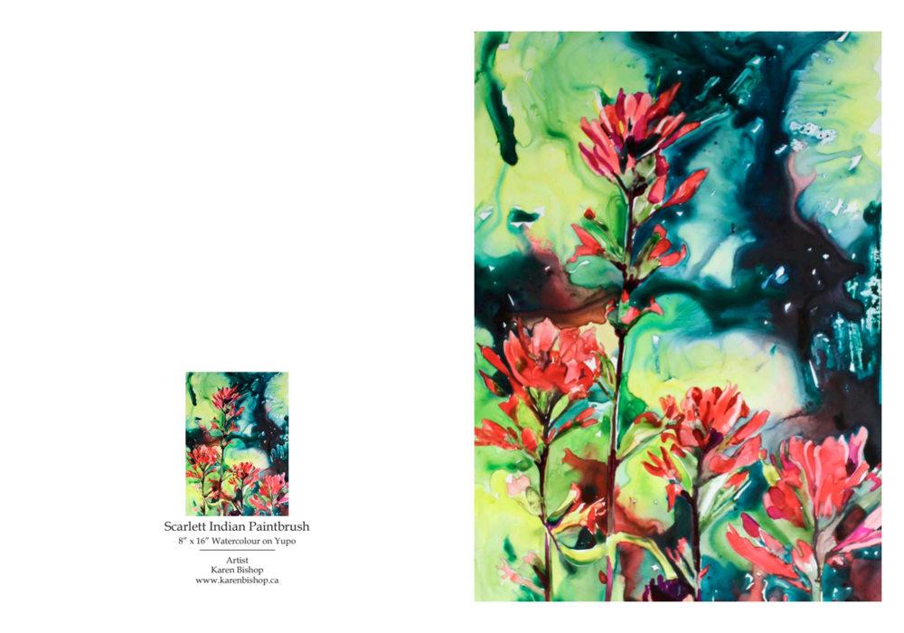 81272 Scarlett Indian Paintbrush NC PROOF