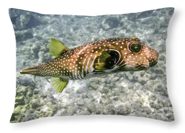 Puffer Fish Pillow