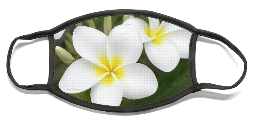 Pleasing Plumeria Mask