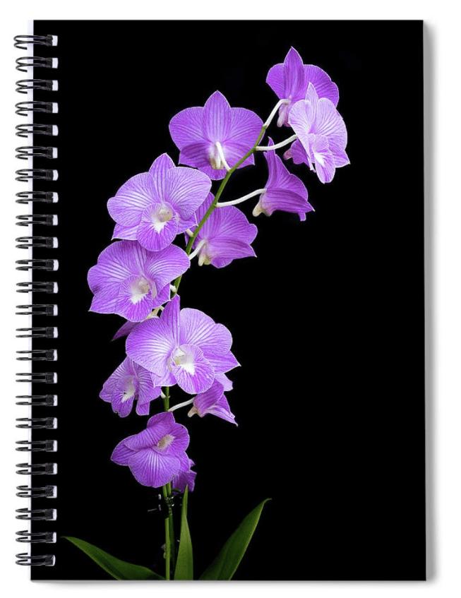 Vivid Purple Orchid Spiral Notebook