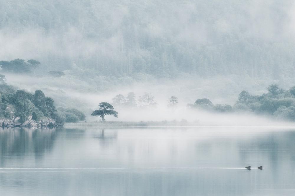 Felice Willat   Killarney Lakeside vnzqgp (1)
