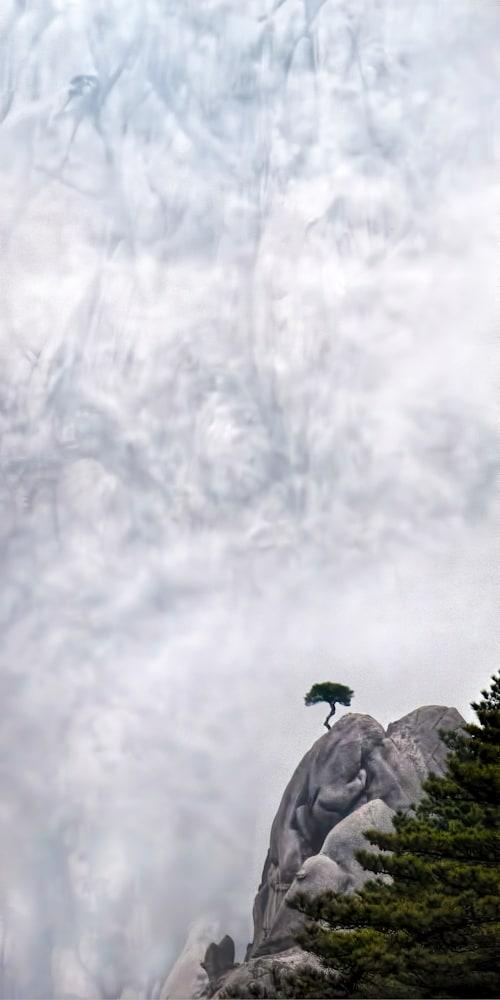 Felice Willat   Lone Tree kidwzj