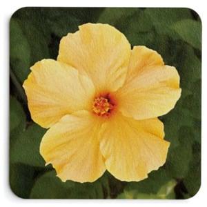 Yellow Hibiscus Coasters