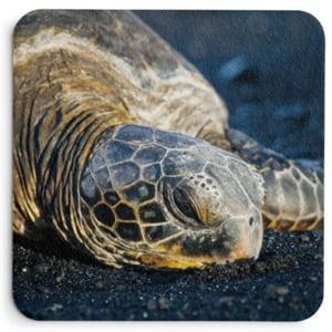 Black Sand Nap Coasters