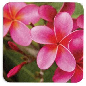 Hot Pink Plumeria Coaster 2