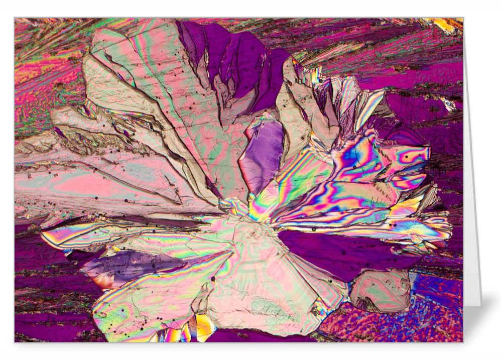Sacred Lotus   tartaric acid   Note Card