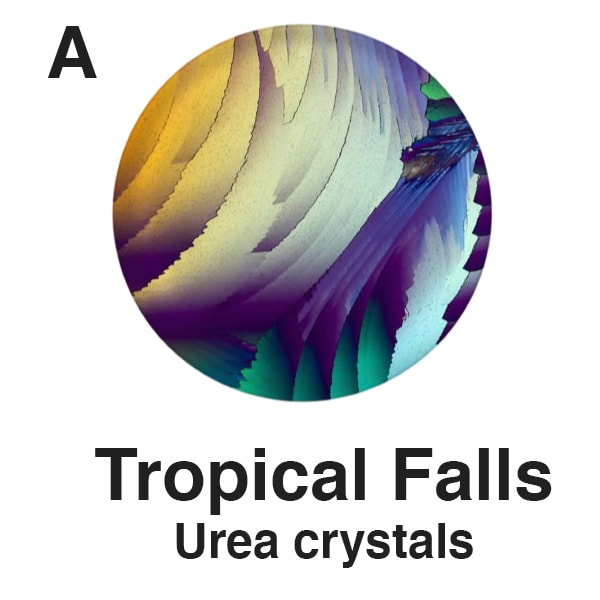 A   Tropical Falls   Plate for Website