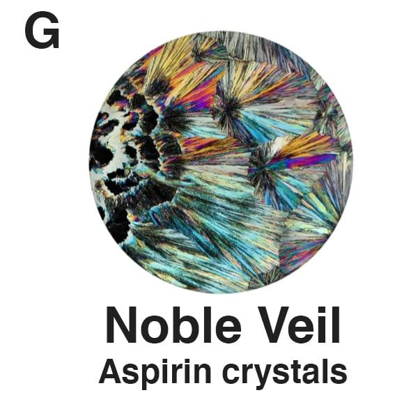 G   Noble Veil   Plate for Website