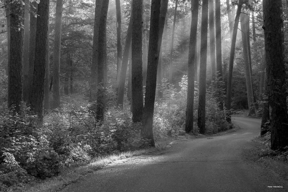 DP674 Wilderness Dr Sun rays b&w