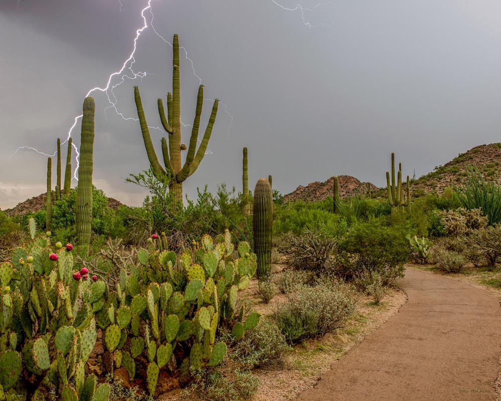 DP407 Monsoon Lightning