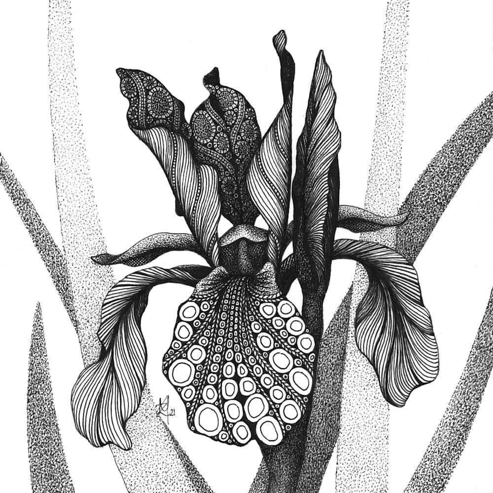 Iris  Shaker's Prayer Siberian Iris