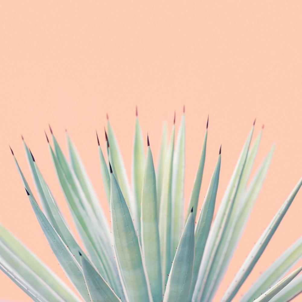 Tropical Plant Pastels 01