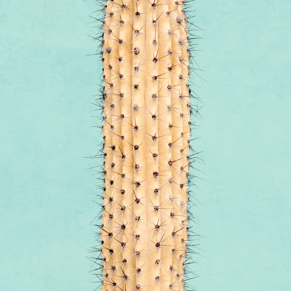 Tropical Plant Pastels 02