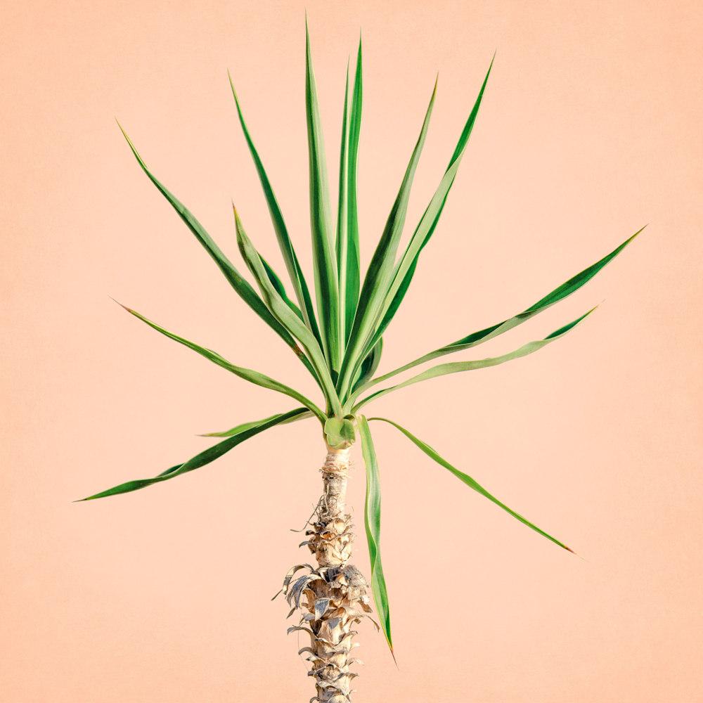 Tropical Plant Pastels 07 Edit