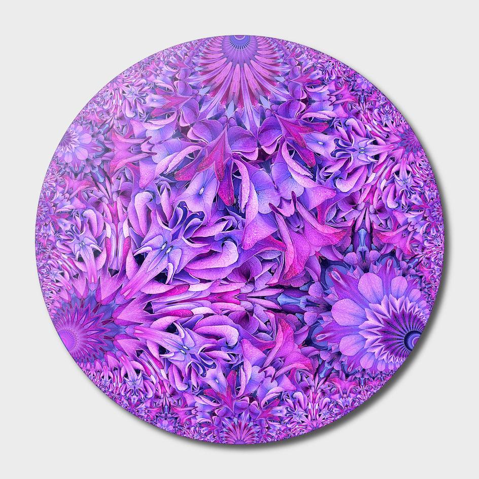 Curioos Purple Hydrangea