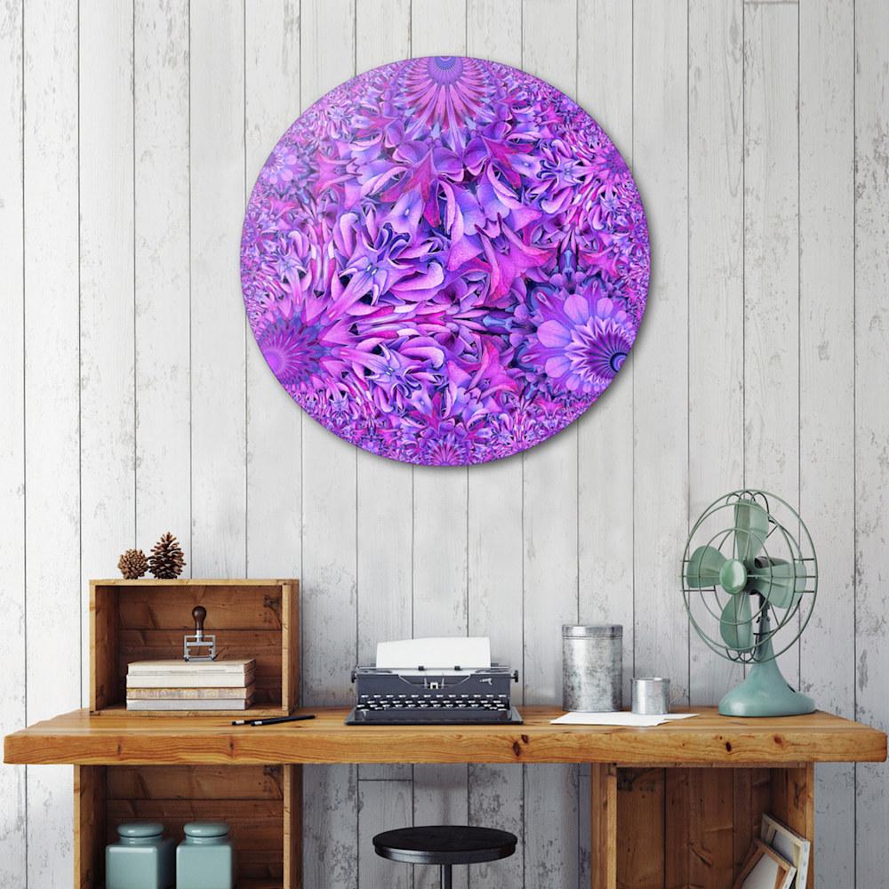 Curioos Purple Hydrangea situ