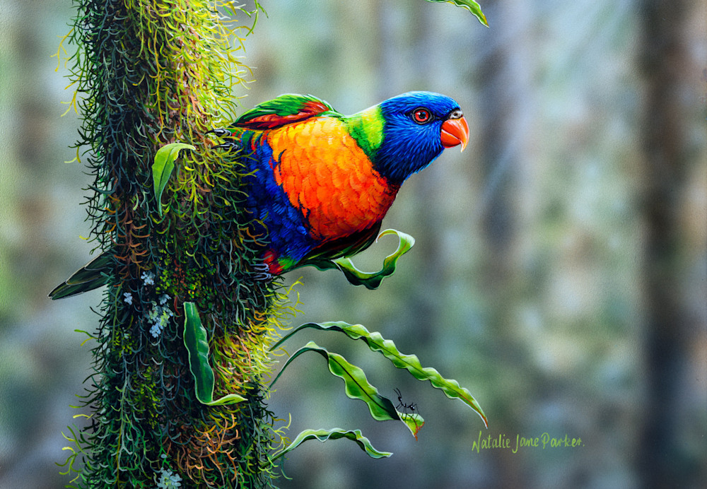Flying Colours Rainbow Lorikeet by Natalie Jane Parker