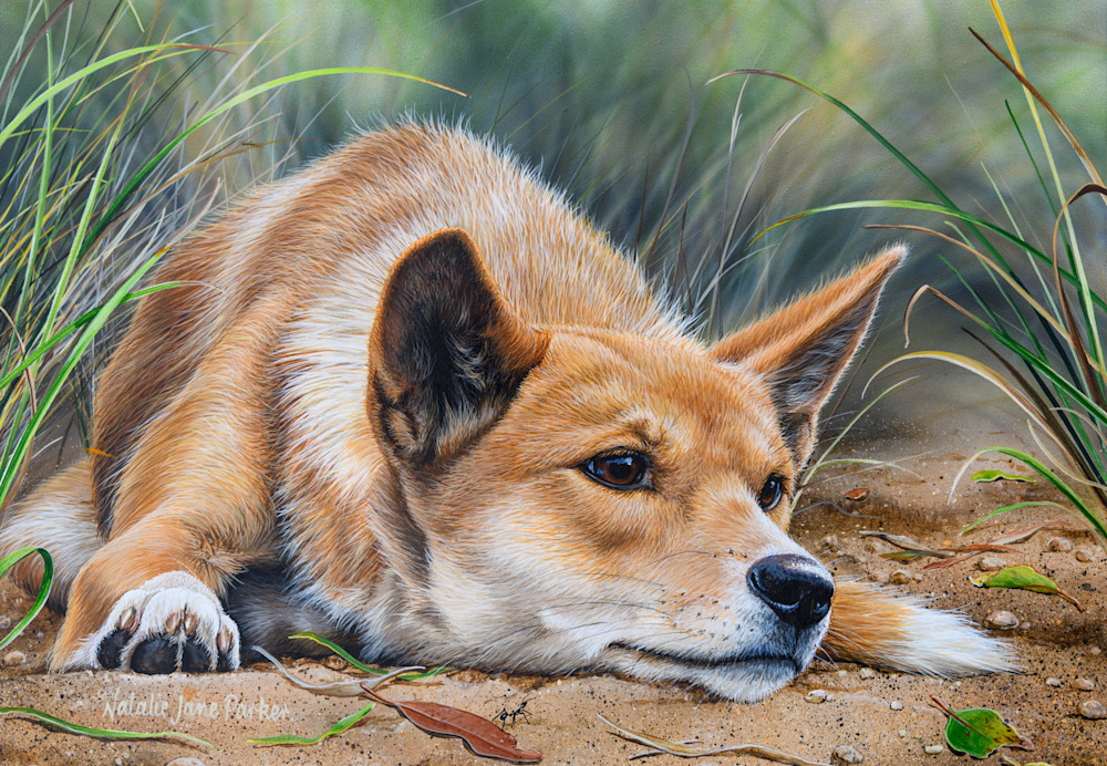 Lost in Thought Dingo Natalie Jane Parker