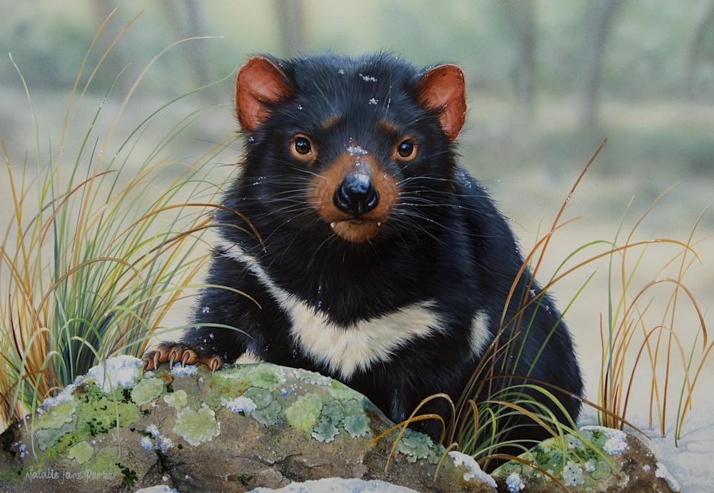 Winter Whiskers   Tasmanian Devil   Natalie Jane Parker   July 2016