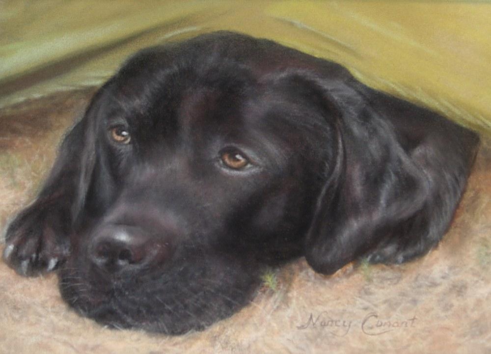 BLACK DOG FINAL 2ND