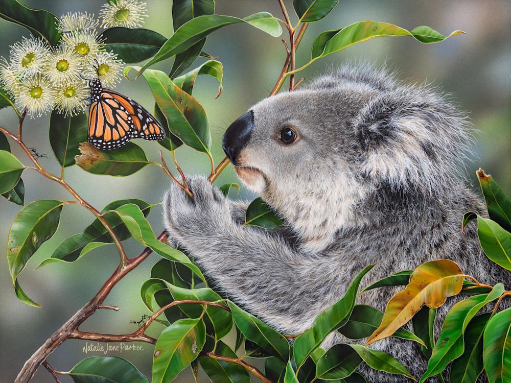 Sweet Things   Koala with a Wanderer Butterfly