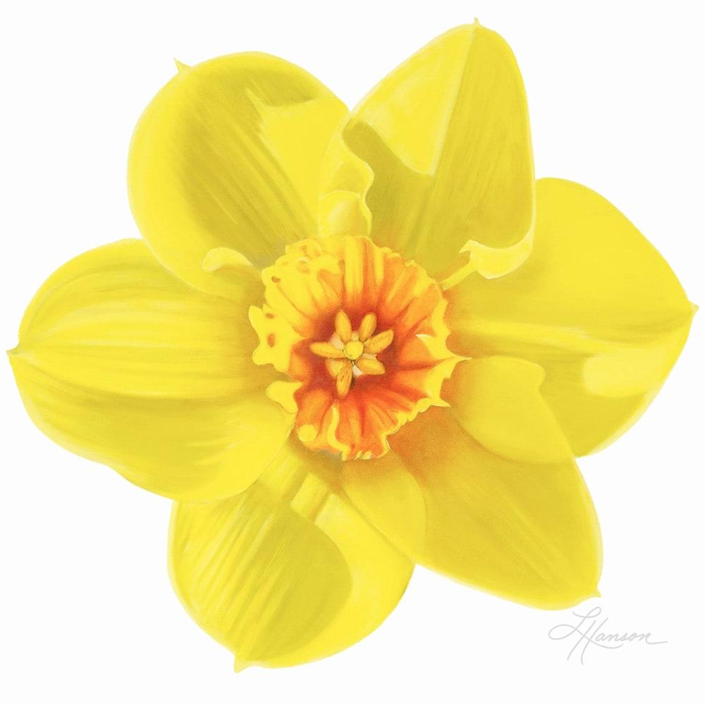 Daffodil fixed