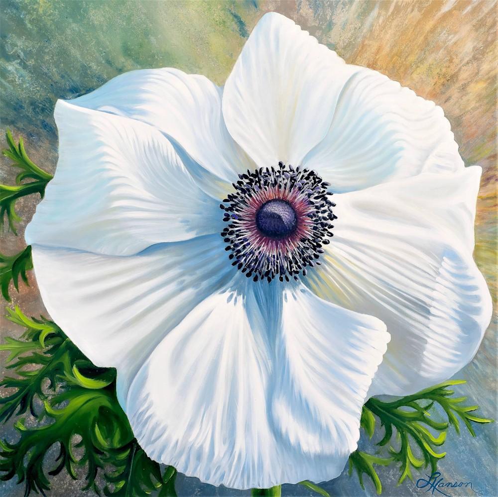 White Poppy Anemone