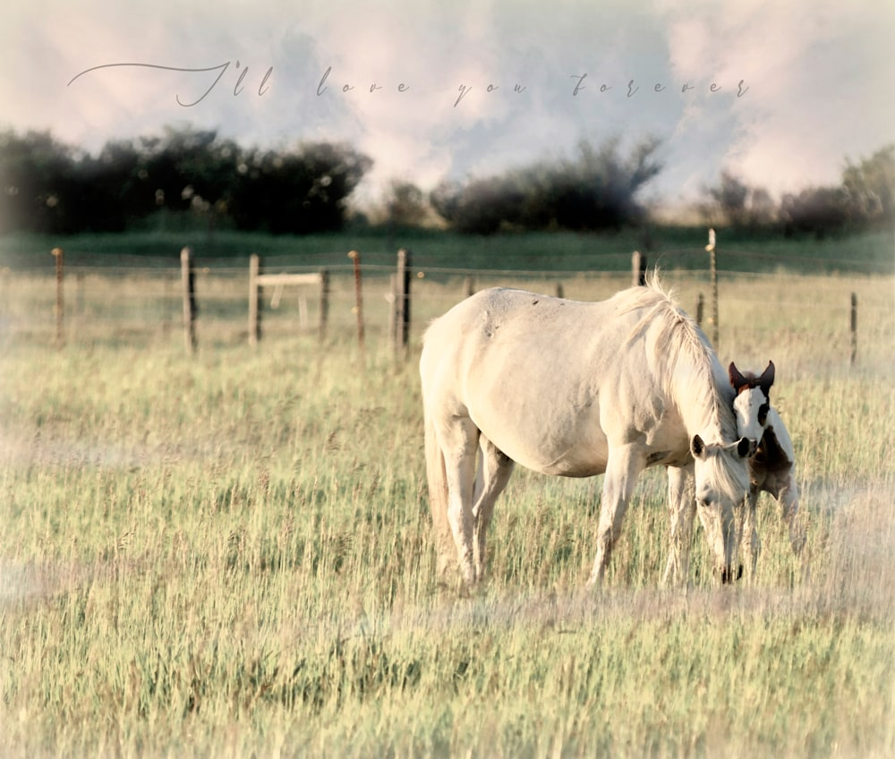 horse and colt lean  ss