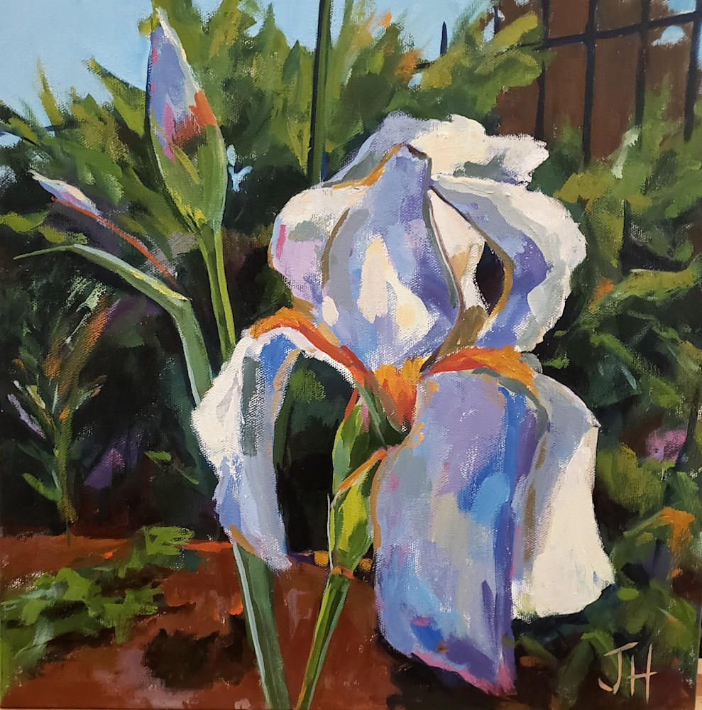 Hallgren Iris on Spring Garden II