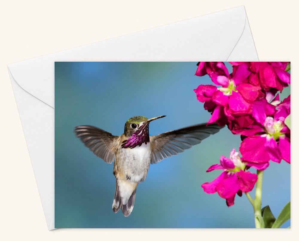 Calliope Hummingbird  Card w Envelope