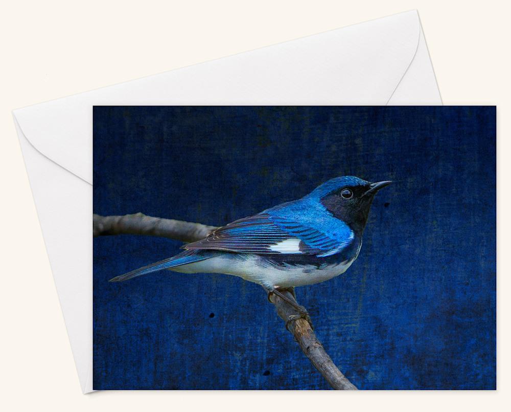Black Throated Blue Warbler  Card w Envelope