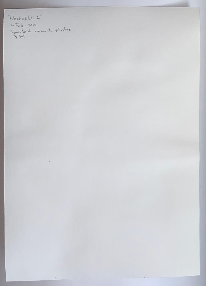 IMG 5358