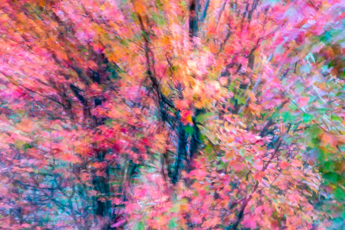 An abstract colorful photo of trees