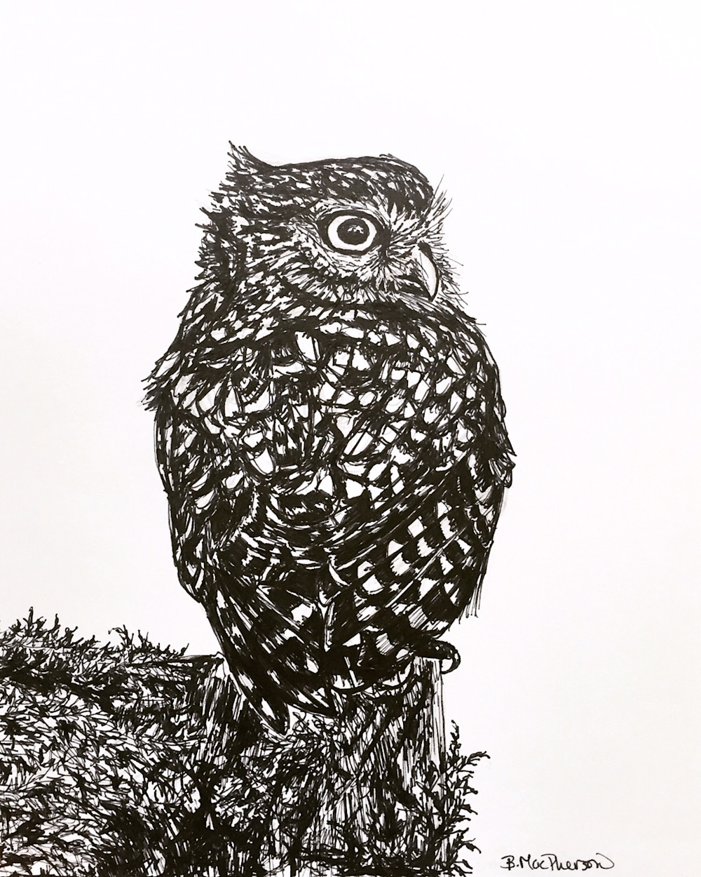 Owl Illustration in Pen and Ink by Becky MacPherson