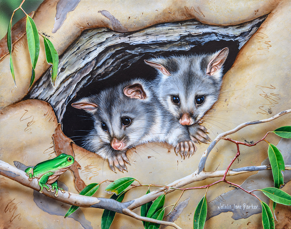 COSY HOME - COMMON BRUSHTAIL POSSUM | NATALIE JANE PARKER | AUSTRALIAN NATIVE WILDLIFE