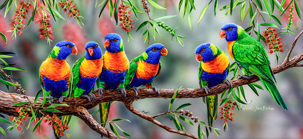 COLOURFUL CHATTER - RAINBOW LORIKEET | NATALIE JANE PARKER | AUSTRALIAN NATIVE WILDLIFE