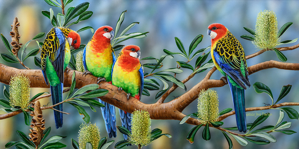 BANKSIA FRIENDS - EASTERN ROSELLA | NATALIE JANE PARKER | AUSTRALIAN NATIVE WILDLIFE