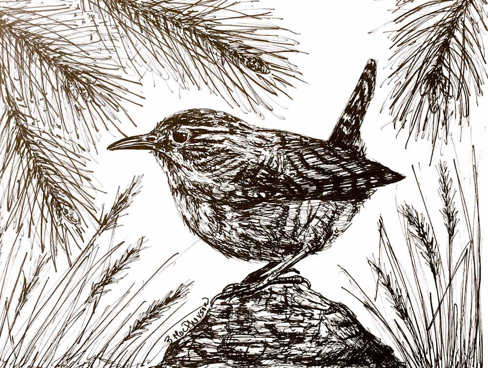 Woodland Wren Illustration by Becky MacPherson