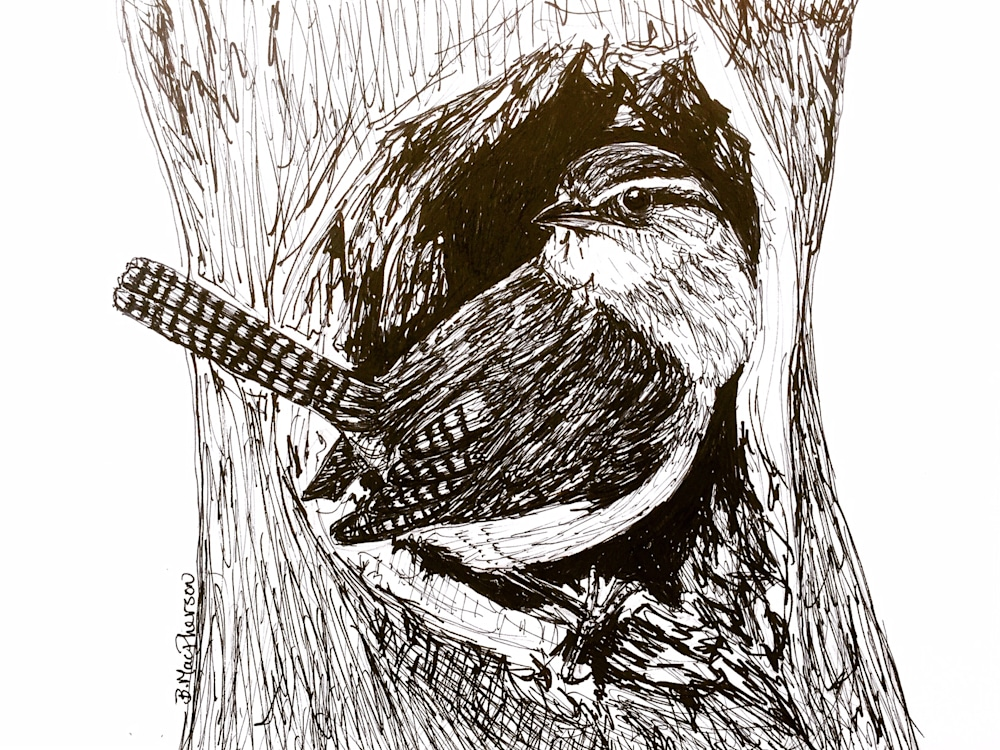 Wren in a Tree Cavity- Pen and Ink Illustration by Becky MacPherson