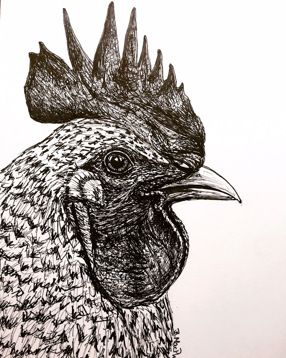 Chicken Pen and Ink Illustration by Becky MacPherson