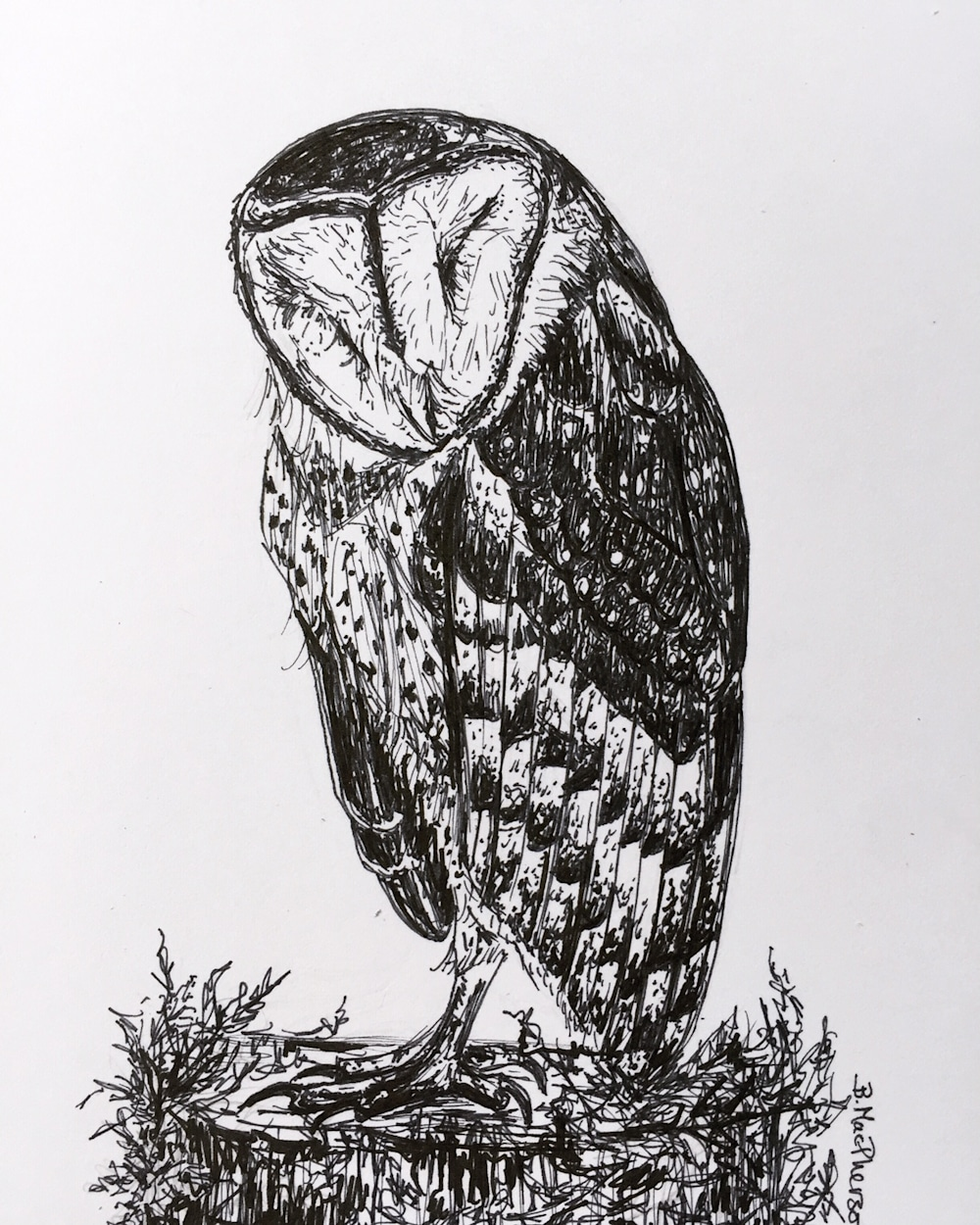 Dreaming Barn Owl Pen and Ink Illustration by Becky MacPherson