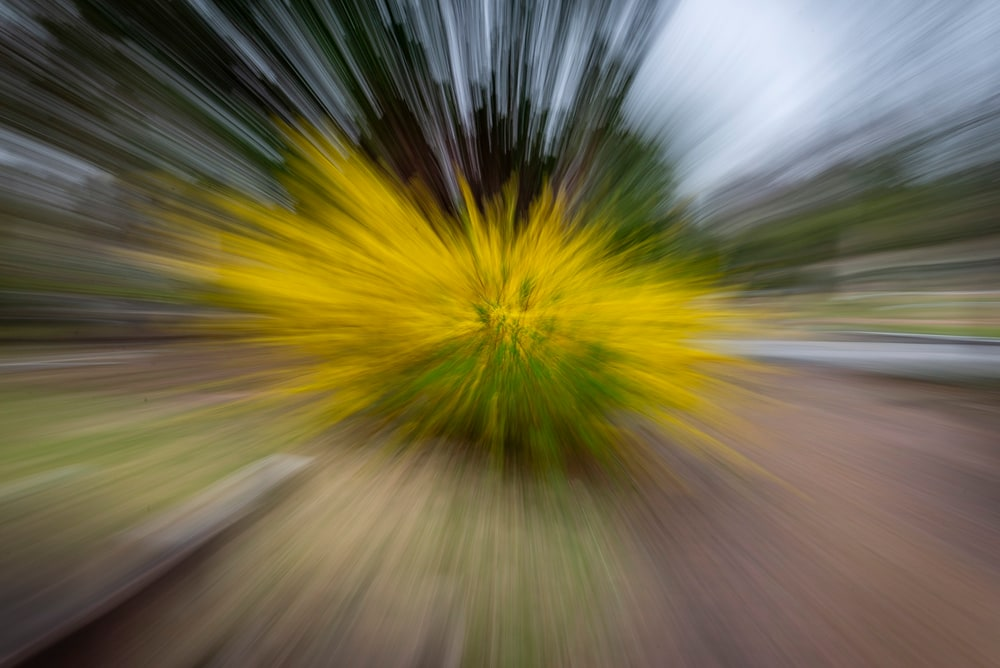 Zoom burst using a Nikon D610