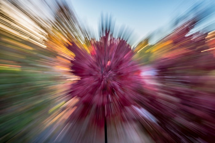 Zoom burst of a colorful tree in the fall makes a great abstract photo