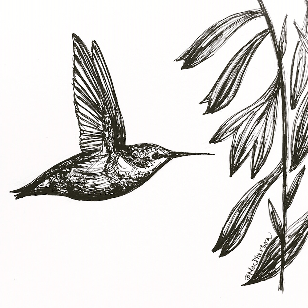 Hummingbird in Flight- Illustration by Becky MacPherson
